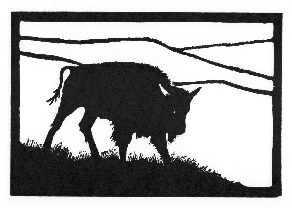 Yearling Bull  •  © Fred Montague $48  •  image 8 x 5.5  •  mat 14 x 12 Edition size: 88  •  status: available