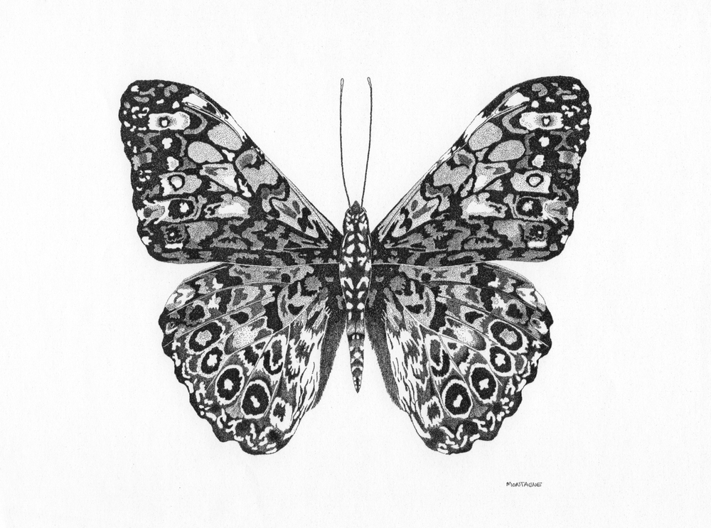 Calico Butterfly • © Fred Montague $2400 • Original • Image 22 x 21 • Mat 32 x 32  Status: available