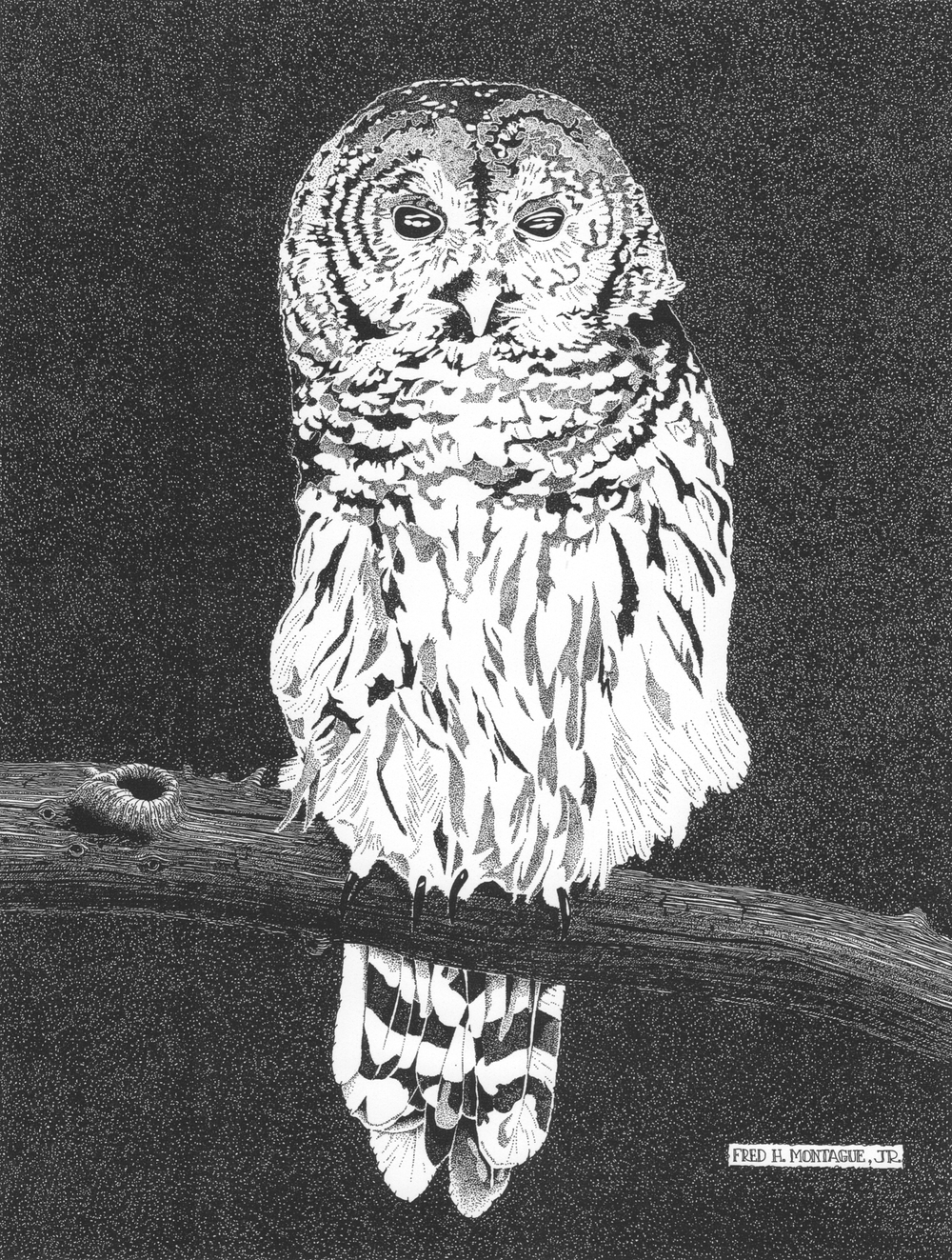 Barred Owl • © Fred Montague Photolithograph Status: Sold Out
