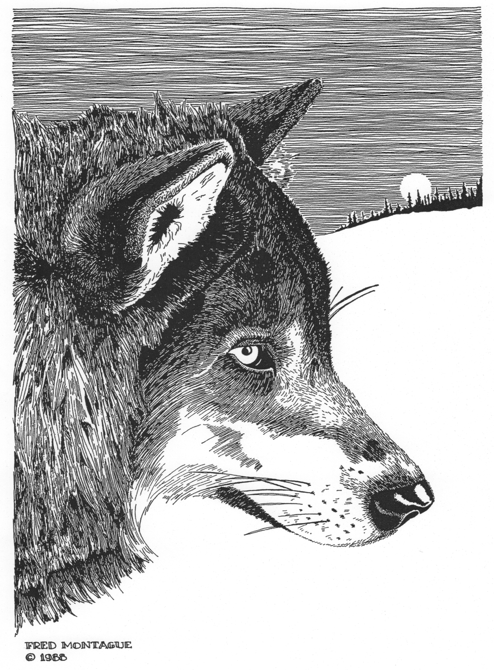 Gray Wolf• © Fred Montague  Letterpress Print • image 8.5 x 11.5 • matted 16 x 20  Sold Out