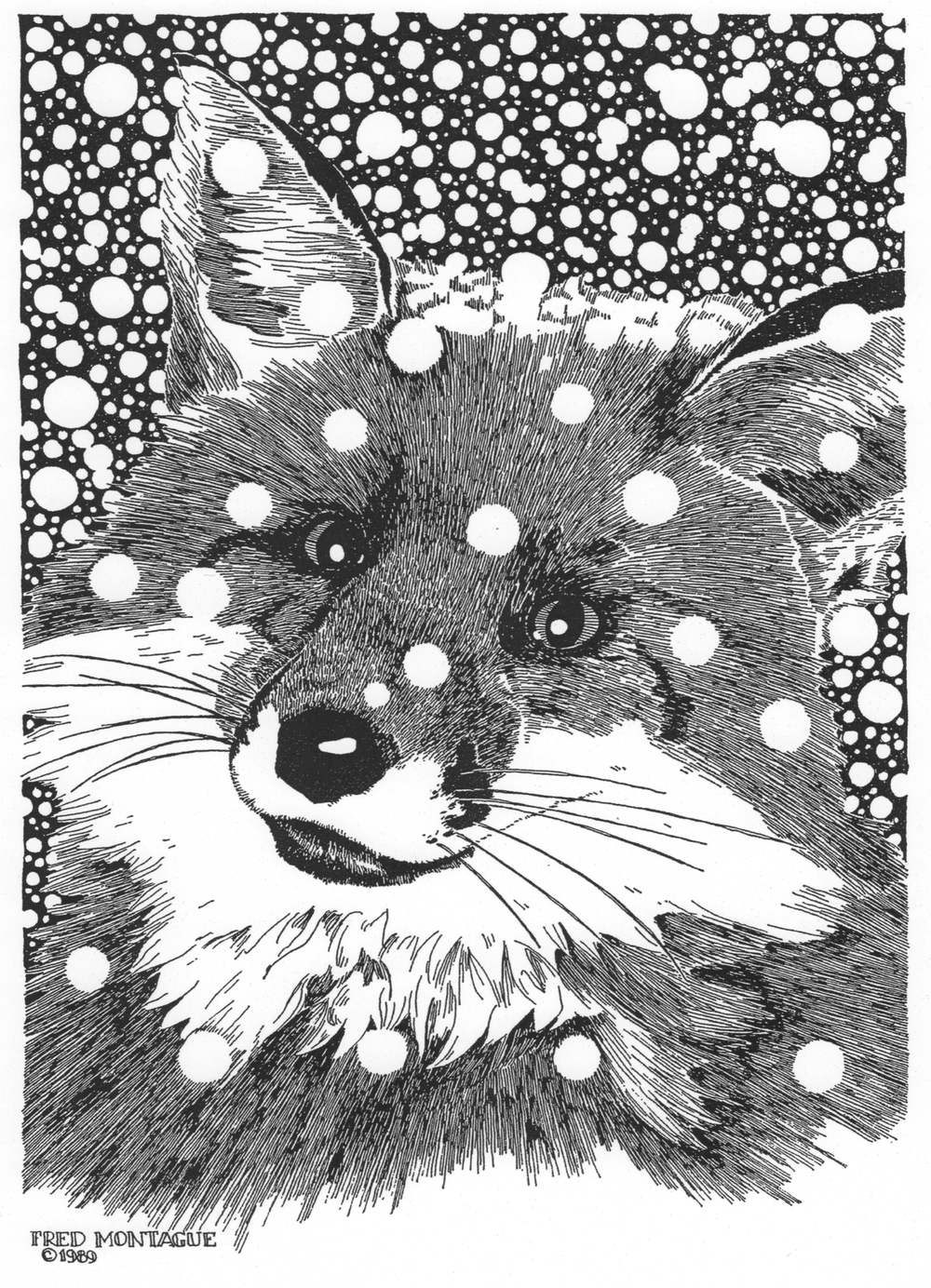 Snow Fox• © Fred Montague  Letterpress Print • image 8.5 x 11.5 • matted 16 x 20  Sold Out