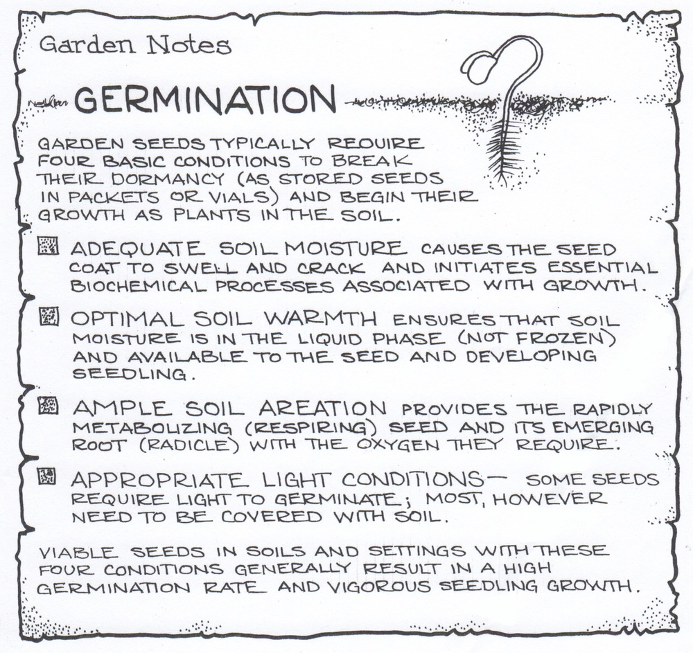 Garden notes: Germination. © Fred Montague