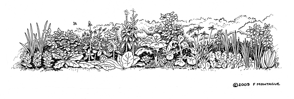 Illustration from Gardening: An Ecological Approach. © Fred Montague