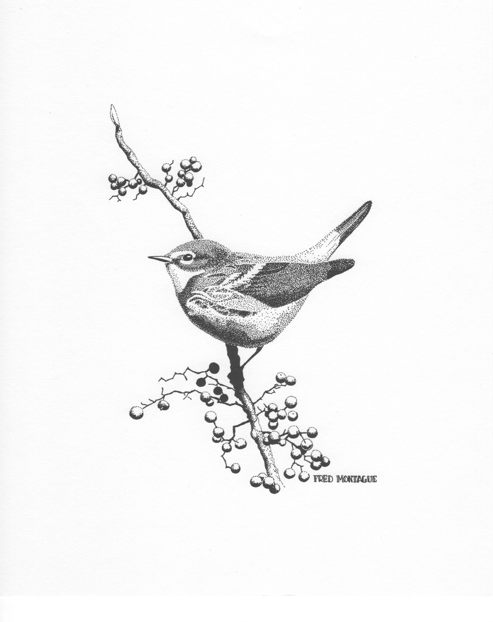 """Autumn Treat"", photolithograph of a myrtle warbler. © Fred Montague"
