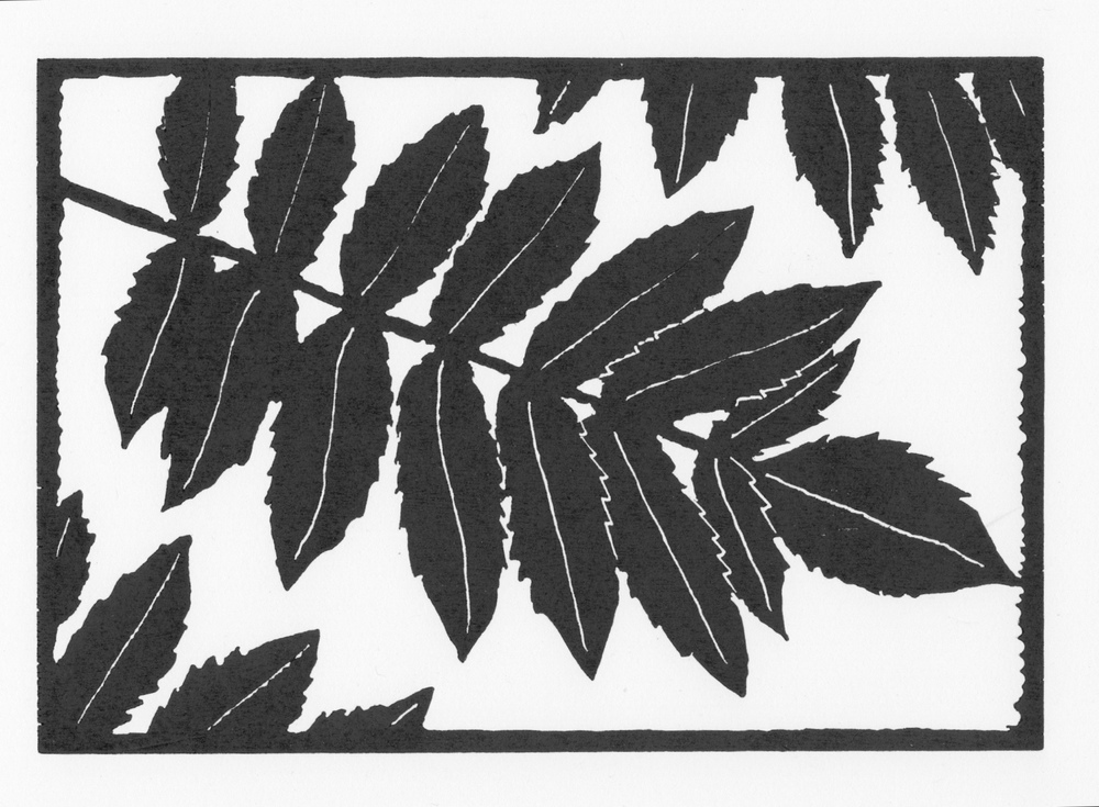 Sumac Leaves  •  © Fred Montague $48  •  image 8 x 5.5  •  mat 14 x 12 Edition size: 88  •  status: available