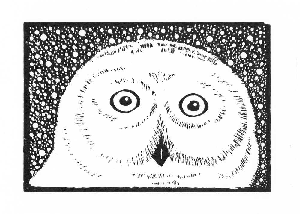 Snowy Owl  •  © Fred Montague $48  •  image 8 x 5.5  •  mat 14 x 11 Edition size: 88  •  status: available