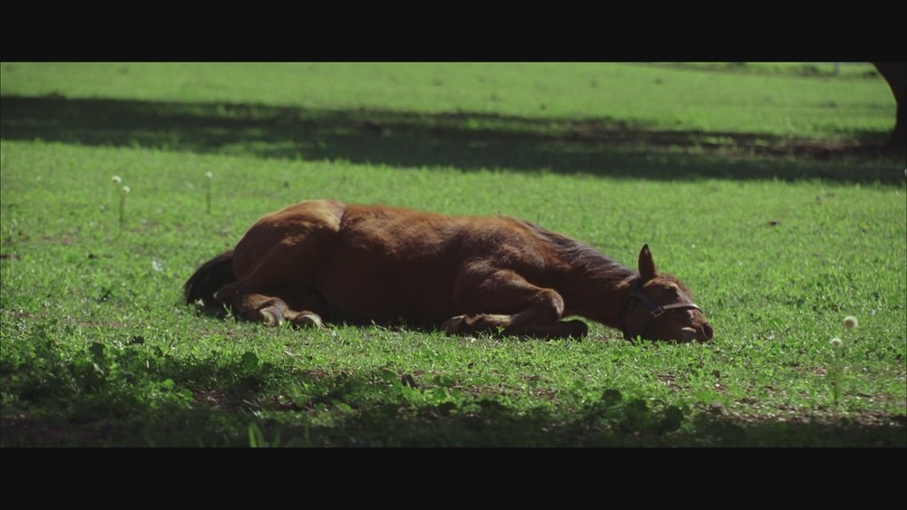 The Next Reel - Seabiscuit 33.jpg