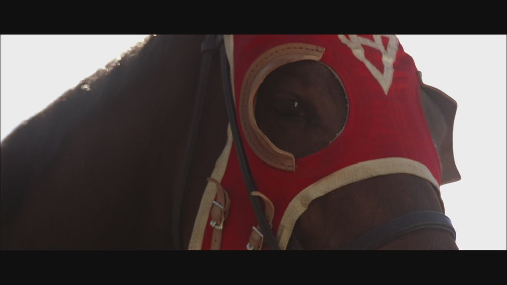 The Next Reel - Seabiscuit 96.jpg