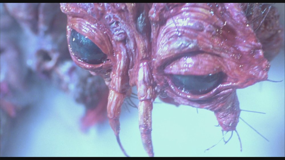 The Next Reel - The Fly 62.jpg