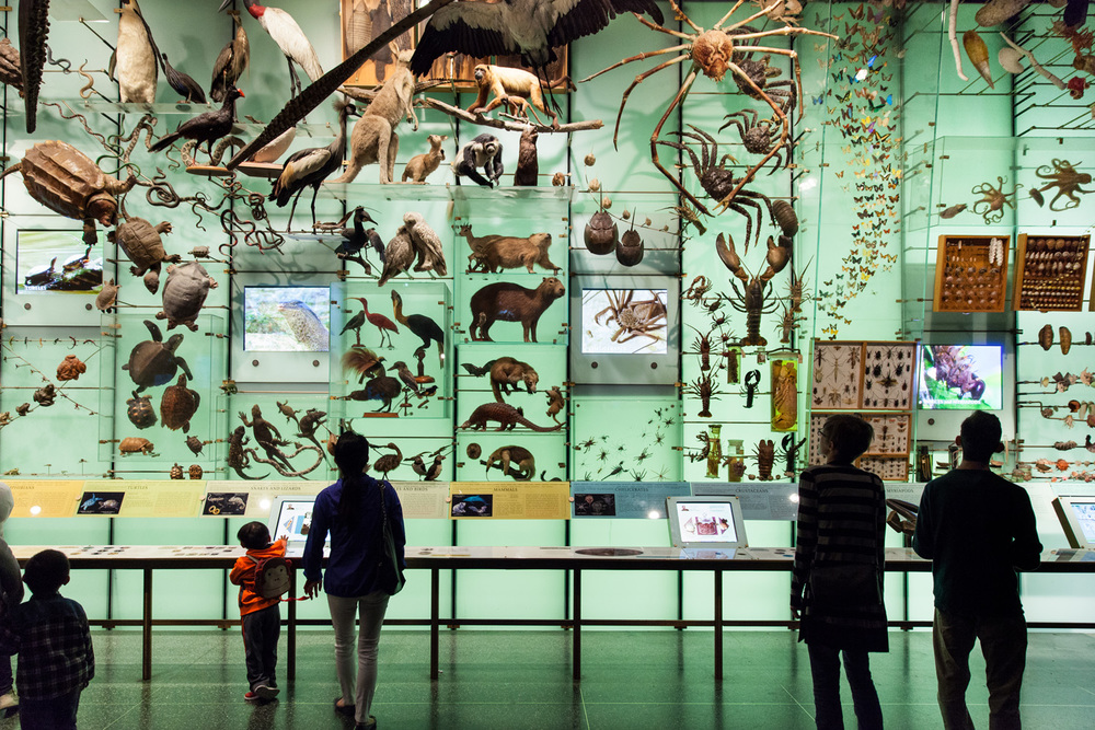 Copy of natural history museum new york city