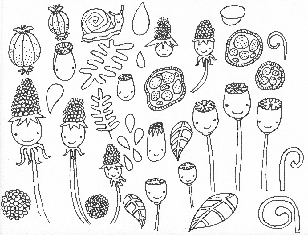 Seeds and pods doodles