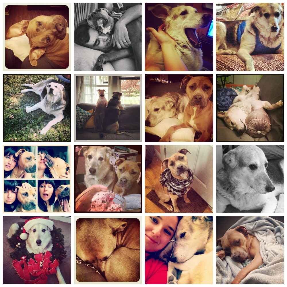 pups collage.jpg