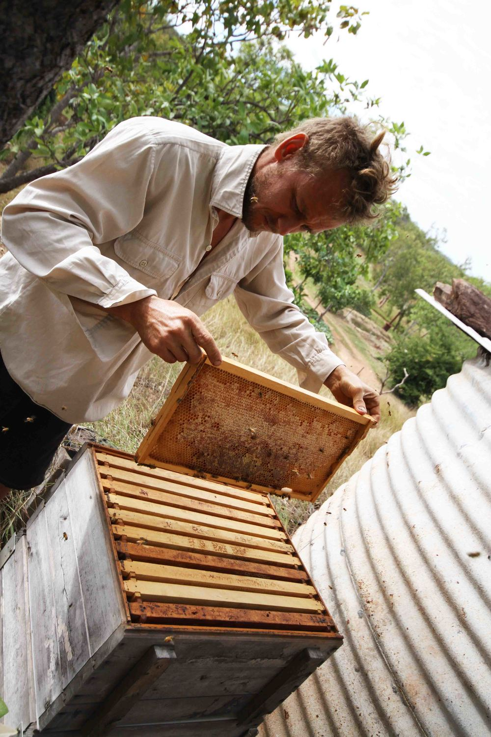 Luke collecting the honey