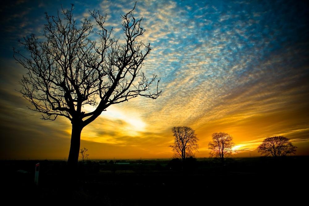 TreeOfEnlightenment5.jpg