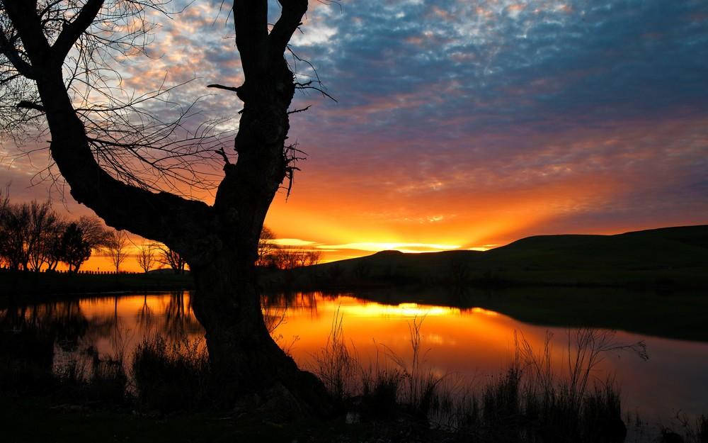 Sunset-Pond-Tree-Silhouette.jpg