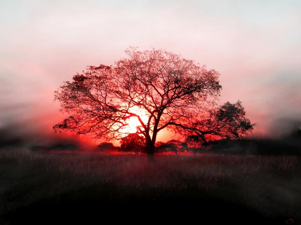 TreeOfEnlightenment8.jpg