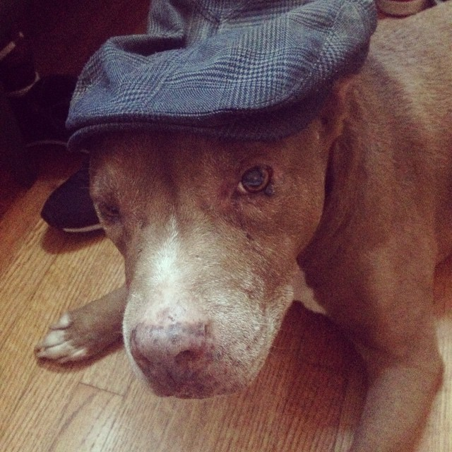 The pooch wearing Daddy-O's cap #cheebacheebayall #sexypityou