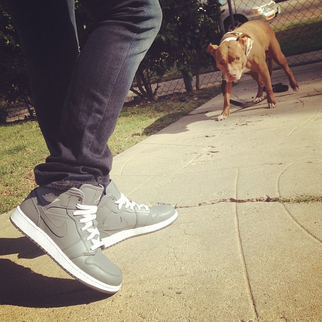 Cheeba checkin out my J's..  #pitbull #midcity #jordanlove