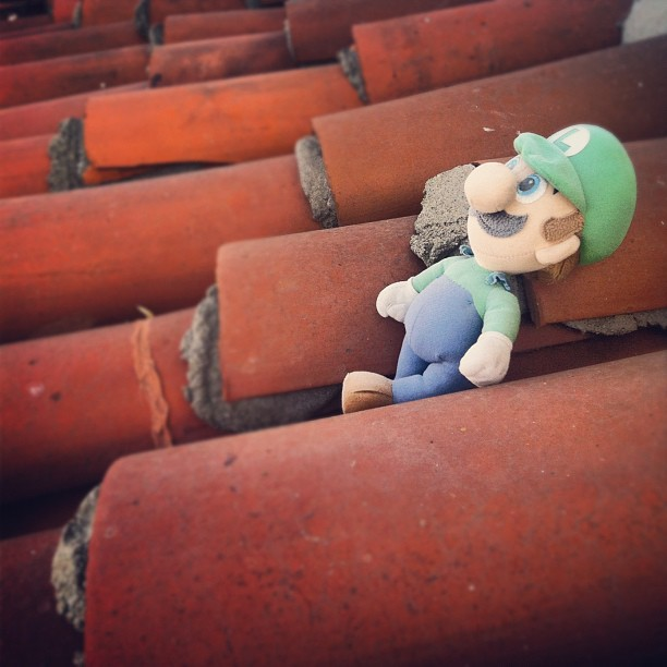 Luigi has been living on my roof for years #guardianangel