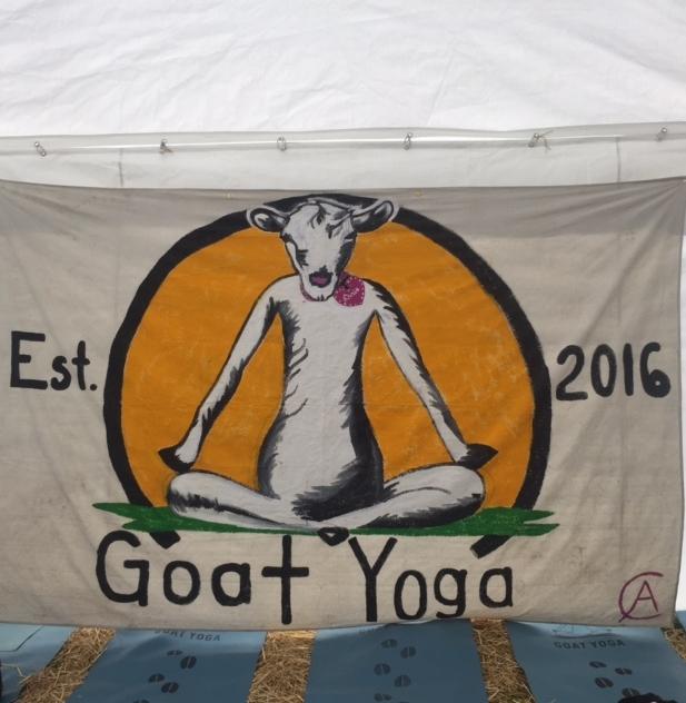 Goat + Yoga =  Goat Yoga -