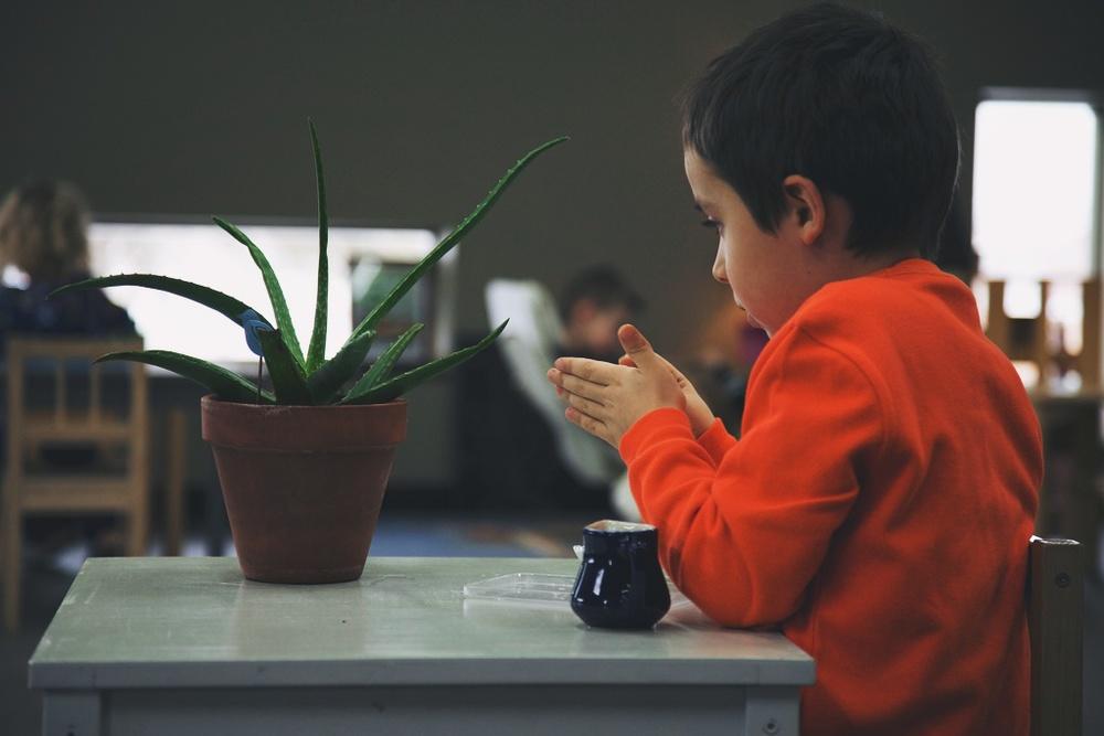 importanceofkindergarten2.jpg