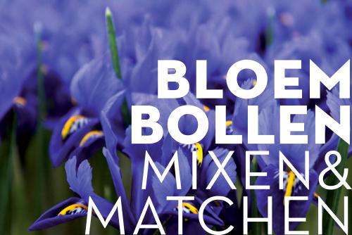 FORTE UITGEVERS | BLOEMBOLLEN  BOEKOMSLAG / ONTWERP BINNENWERK