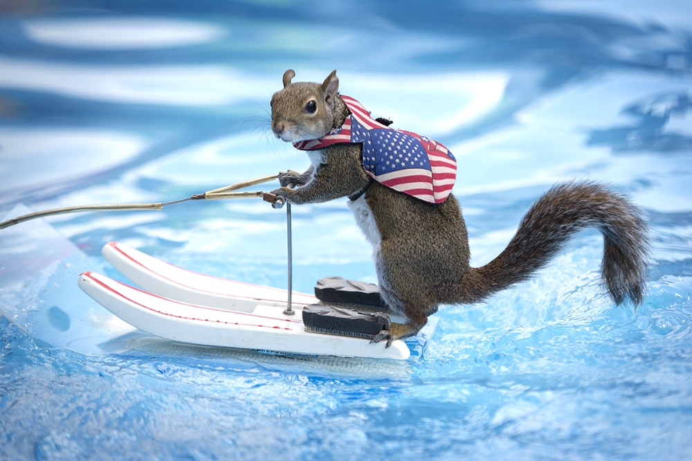 The Pet-A-Palooza event in Tampa brought Twiggy the waterskiing squirrel to entertain. This little dude, the second iteration of Twiggy, has been in movies and television