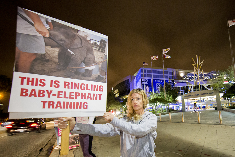 In the debate over animals being used in circuses both sides are passionate about their beliefs. Florida Voices for Animals protested just prior to the Ringling Bros. and Barnum & Bailey circus