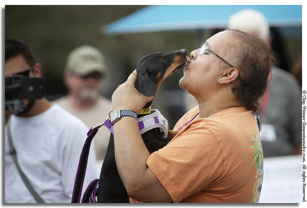 Wiener Dog Derby kissing contest second place winner