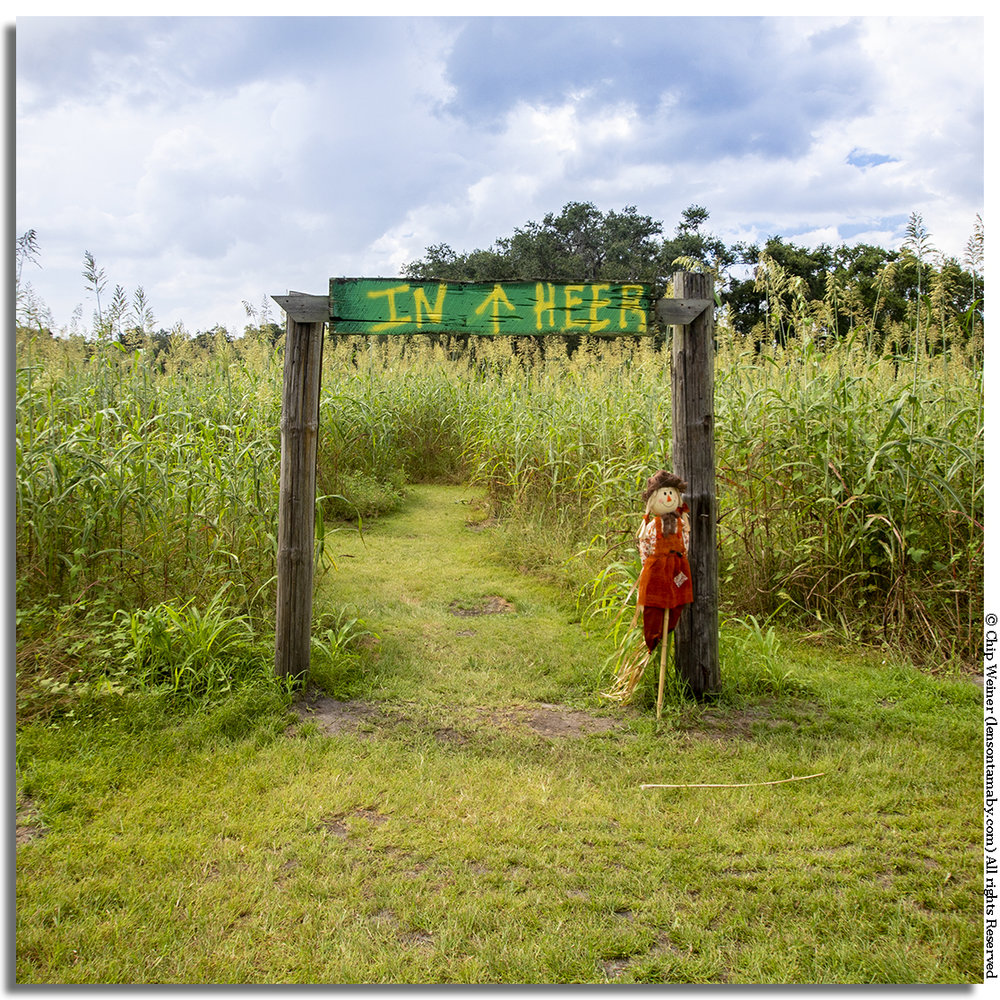Entrance to the Fox Squirrel Corn Maze