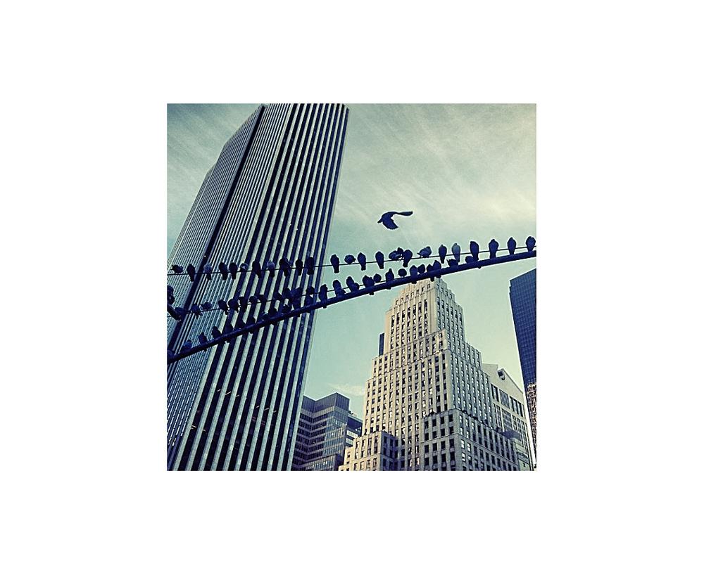 5th Ave Pigeons.jpg