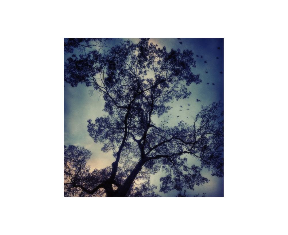 Central park Tree Silhouette.jpg