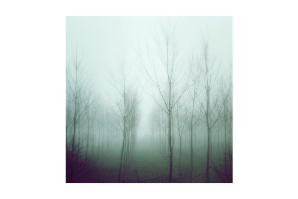 Fog-Forest.jpg