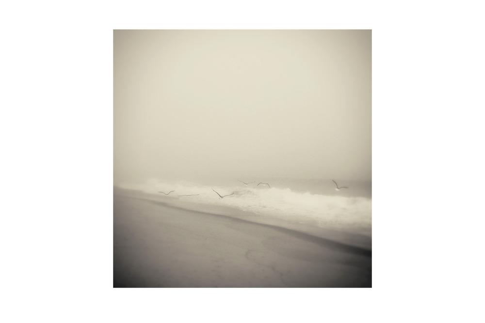 2013 - WAINSCOTT - Beach Seagulls BW.jpg