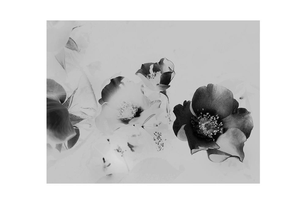 2014 - EAST VILLAGE - Negative Flowers Silver.jpg