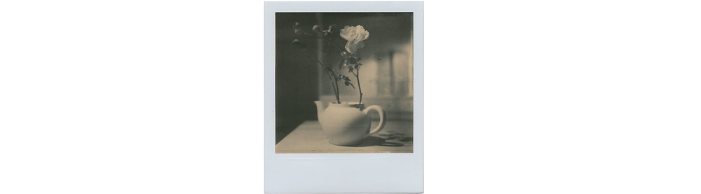 NOYERS - Teapot Polaroid Rose Kitchen.jpg