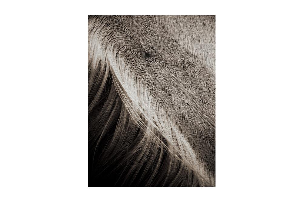 2012 - ZURICH - Horsehair Statue Coriolis - Web.jpg
