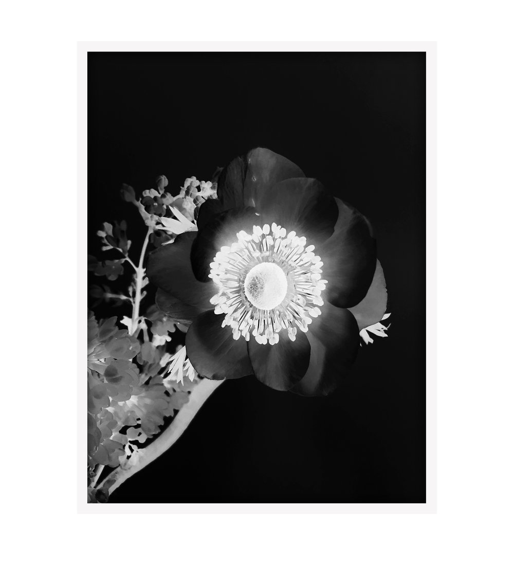201503-STILL LIFE-Poppy Flower Close Up BW 15x20 Framed.jpg