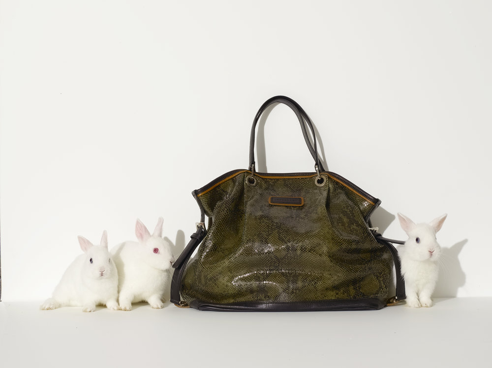 12_06_01_01_longchamp_bunnies_077.jpg