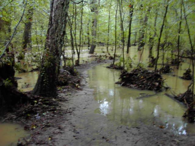 Mos Flats flooding