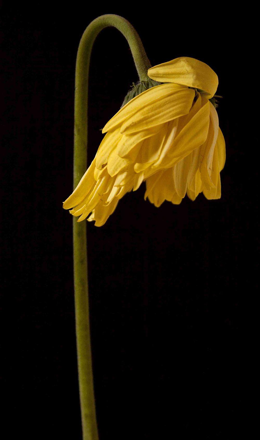 yellow_02.jpg