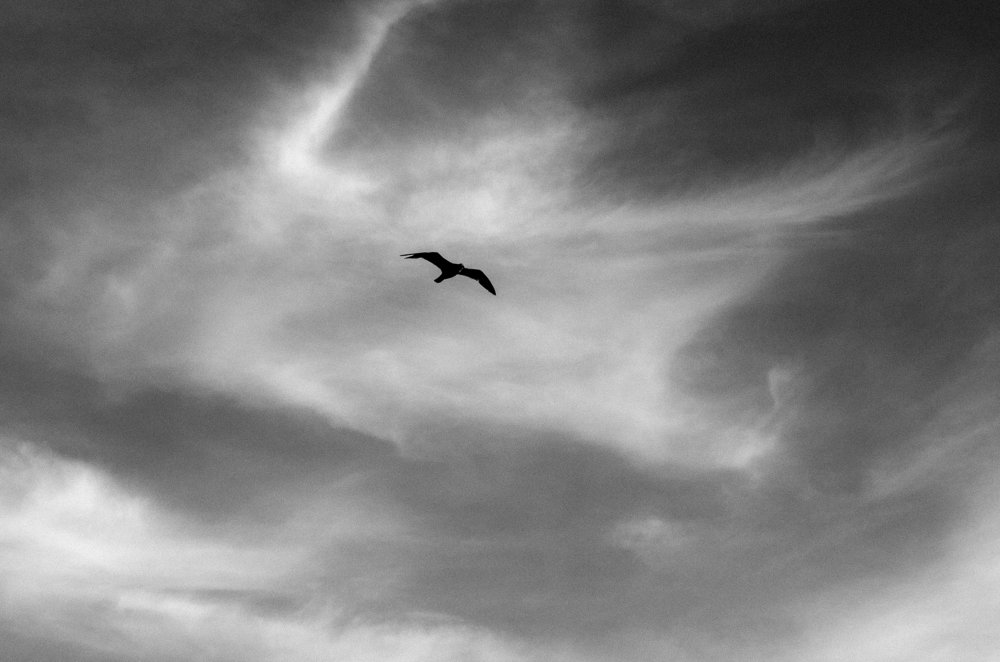 Bird Conejo Valley.jpg