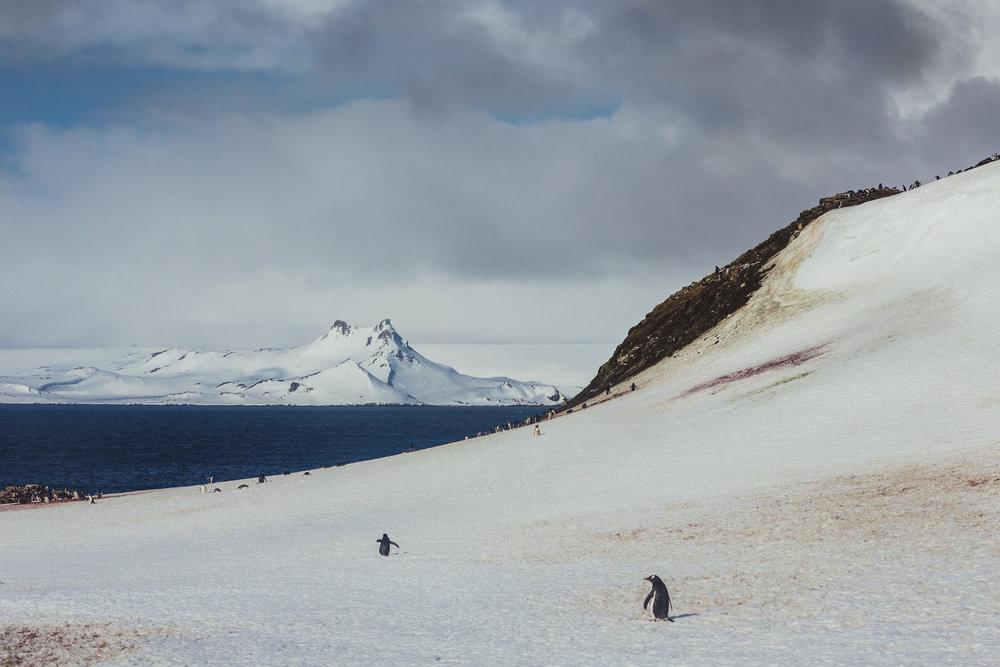 Antarctica (27 of 166).jpg