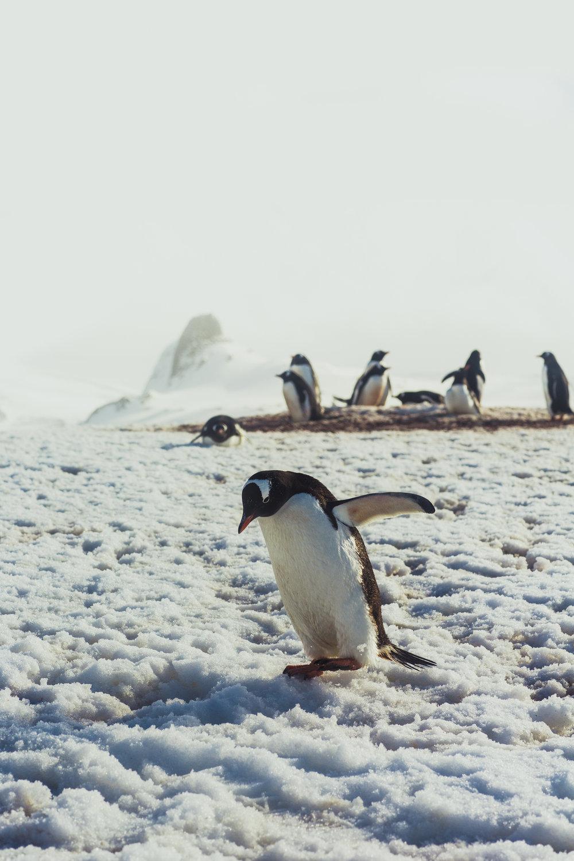 Antarctica (34 of 166).jpg