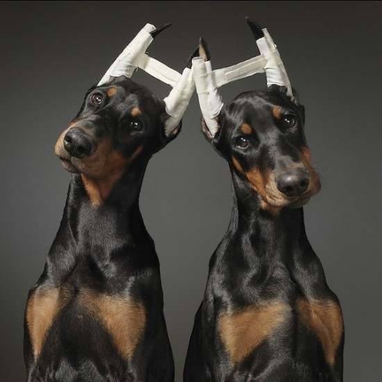 Dog-Photography-by-Tim-Flach-7-550x550.jpg