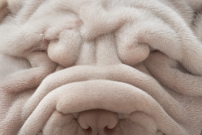 tim_flach_dogs-gods-4-700x466.jpg