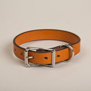 Canine-Collar-thumb-1_1_large.jpg