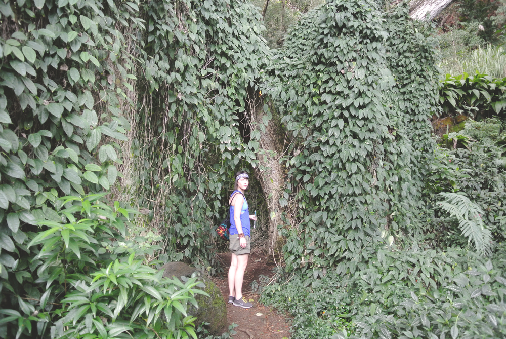 Humongous walls of leafs and vines