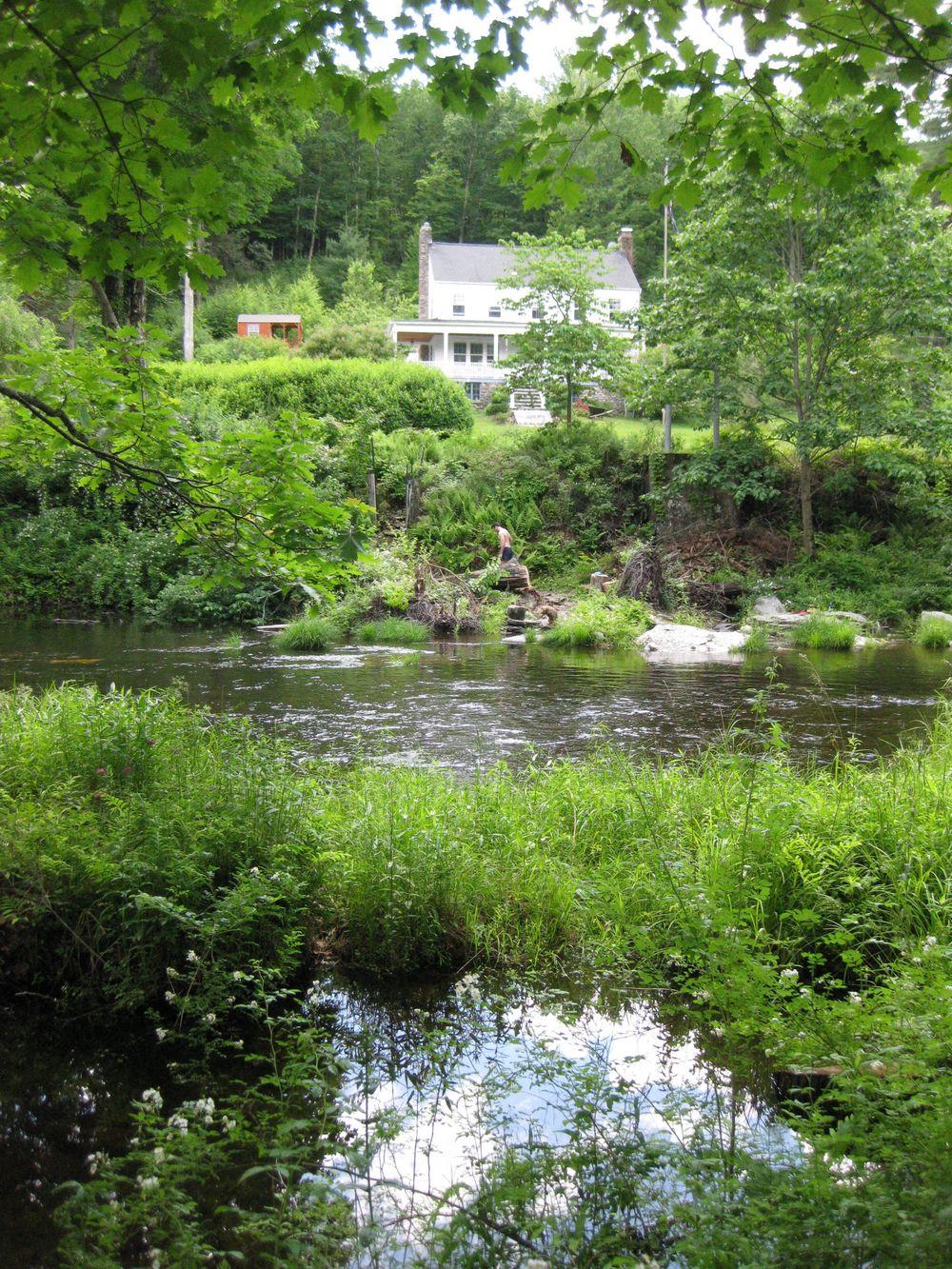 Ferns Above Creek