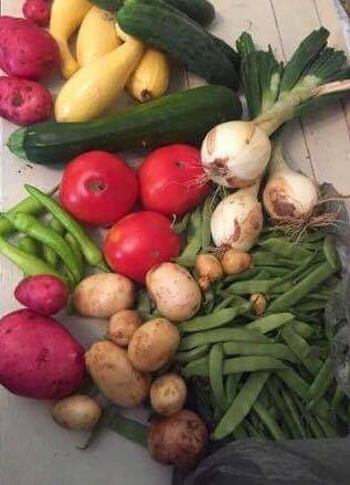 Veggies from Windy Hill Farms and Martha D